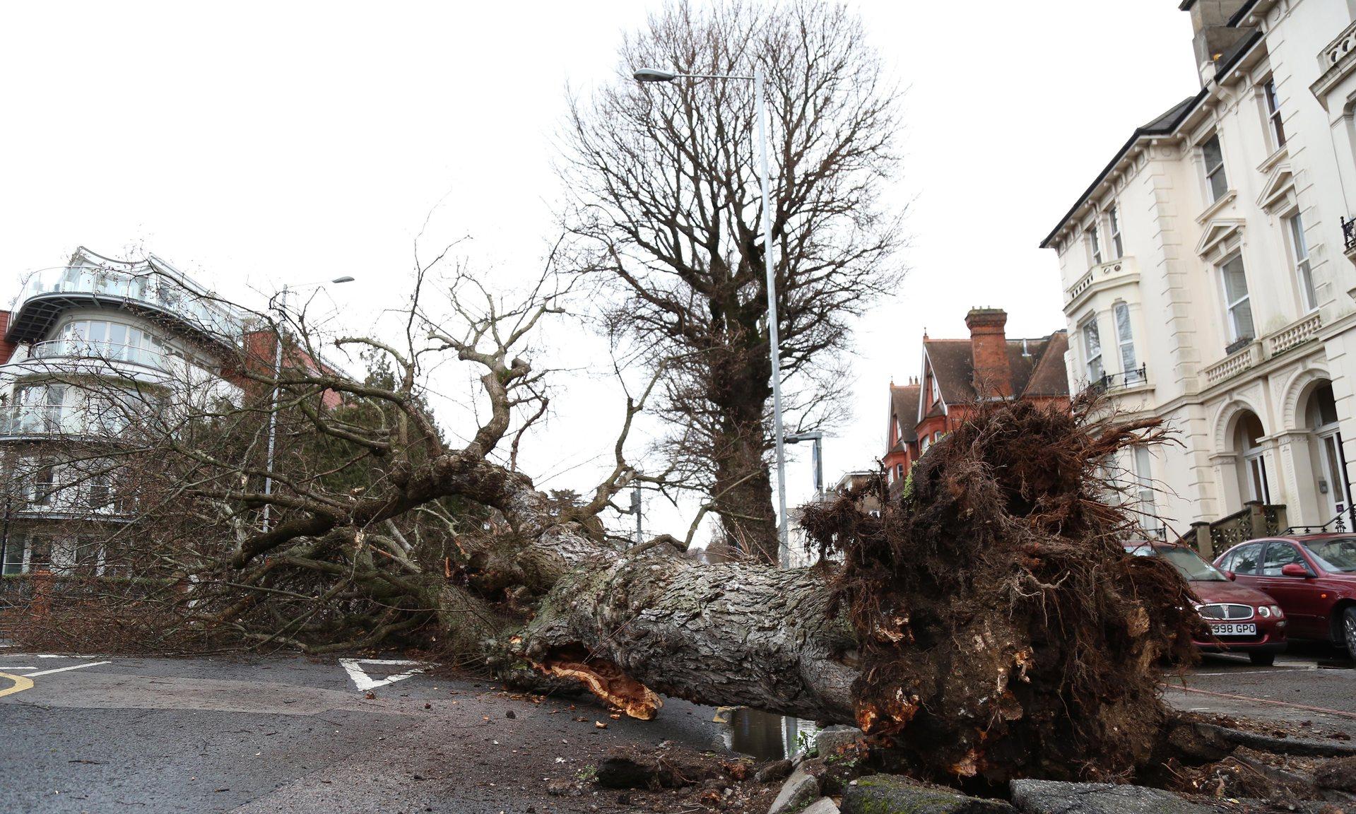 Как убрать высокое дерево, ничего не разрушив вокруг