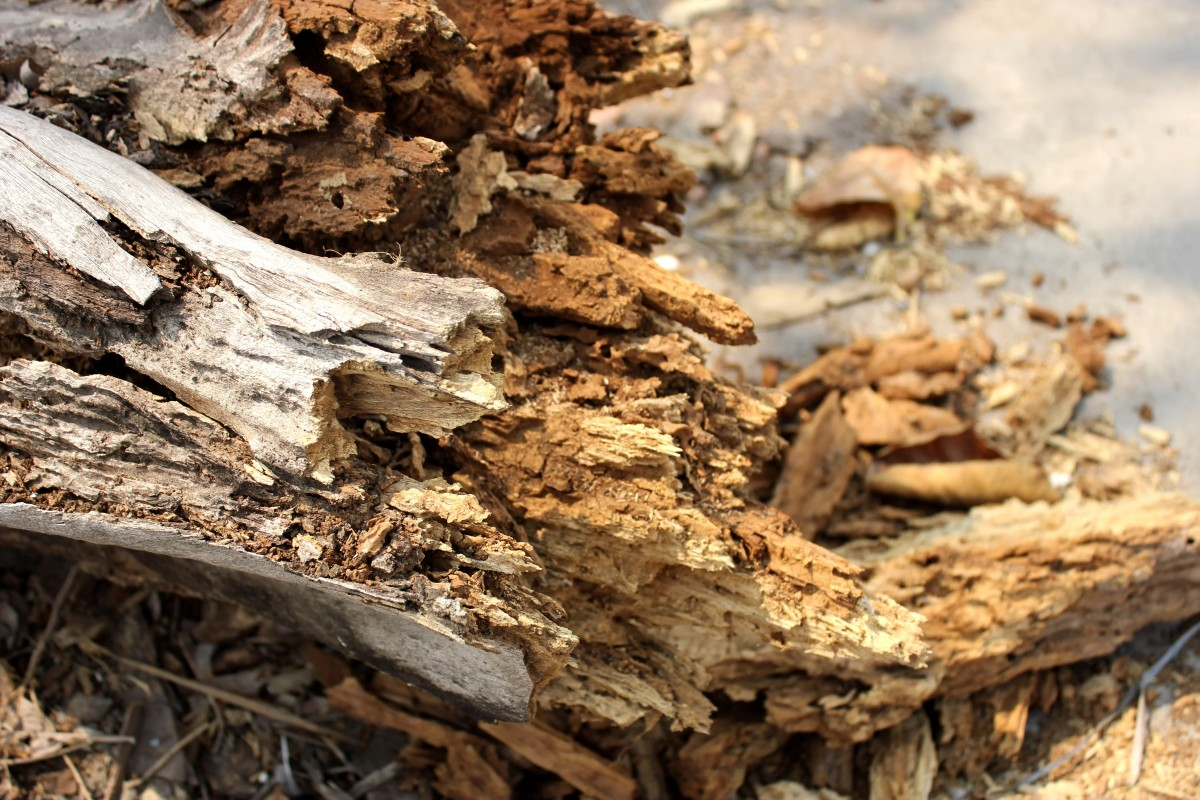 Избавление от высохших и сухостойных деревьев