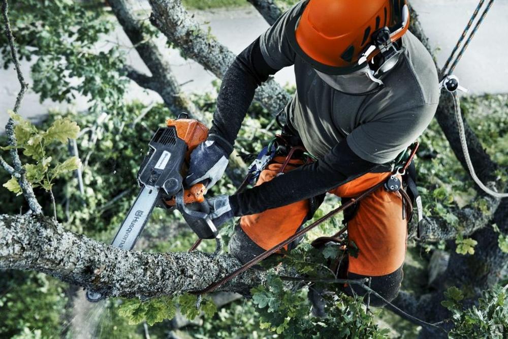 Профессиональная опиловка деревьев