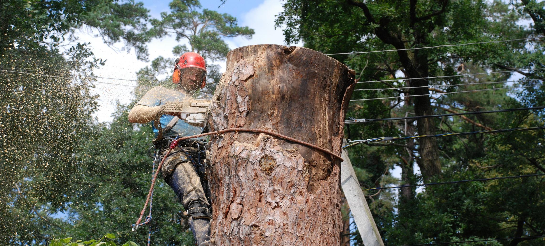 Вырубка и спил деревьев по частям и целиком